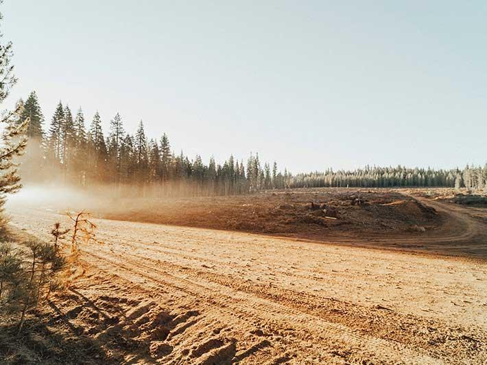 Fighting Deforestation