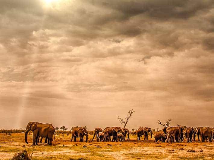 Biodiversity in Africa