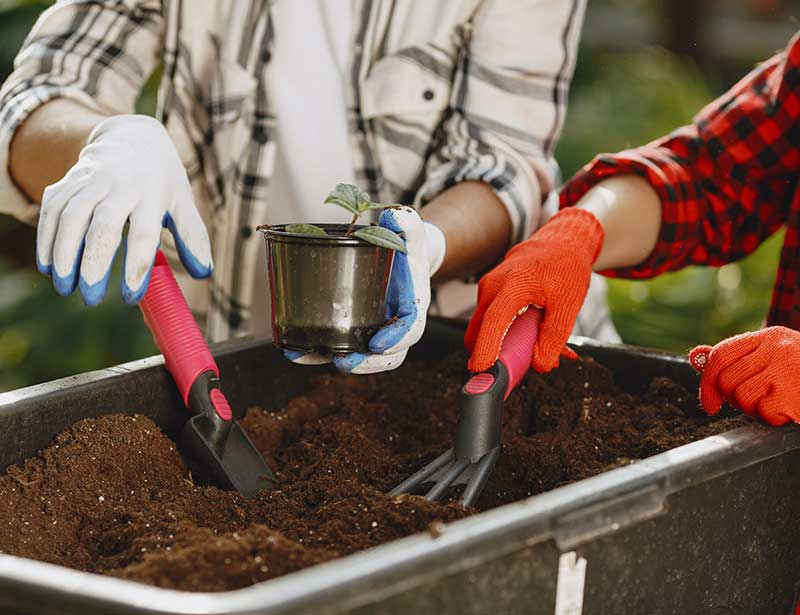Planting a plant in compost