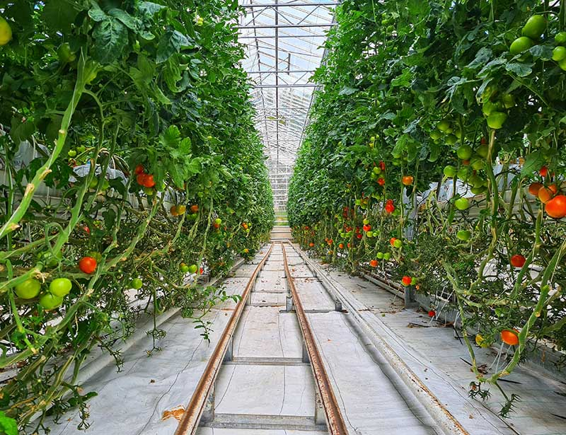 Land use is one of the environmental benefits of hydroponics