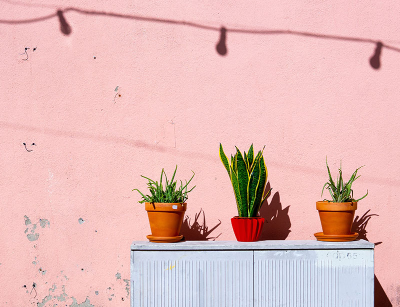 How to recycle plant pots