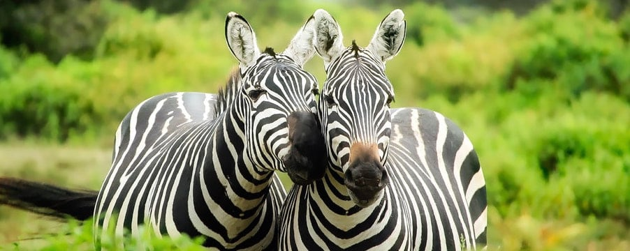 Africa pledges to protect wildlife