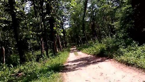 Chapramari forest