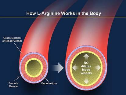 The Arginine Paradox – do L-arginine based NO boosters really work?