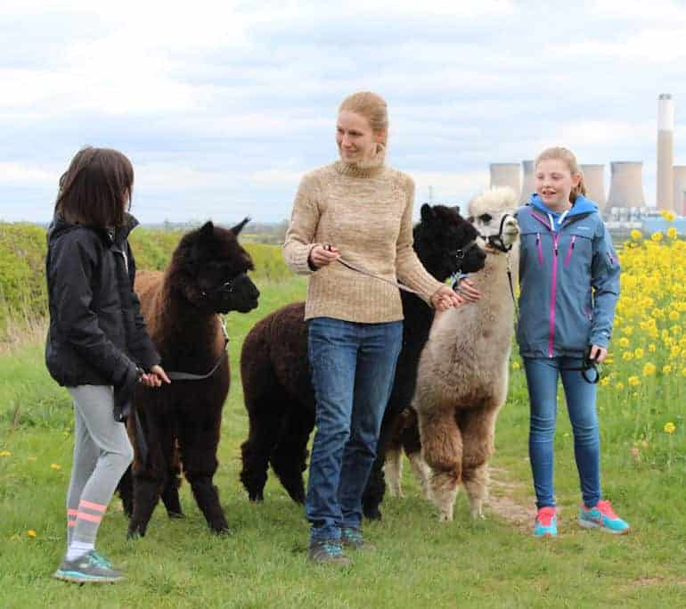 3 girls talking about alpacas