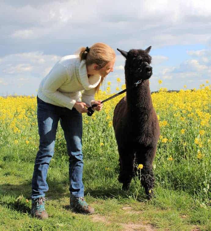 Girl talking to alpaca