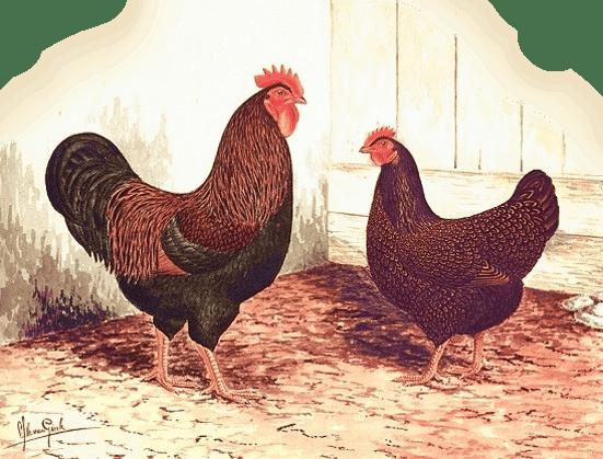 Van Gink's representation of the ideal Barnevelders