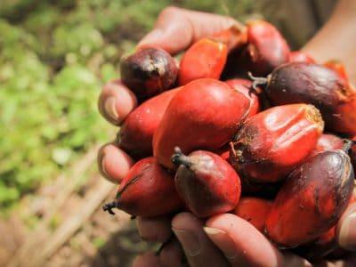 palm oil taqadam