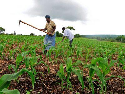 smallholder_farmers_africa