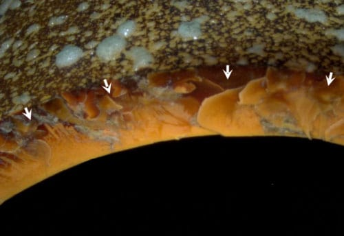 A high-res shot of SPF negatively impacting orange CPVC piping