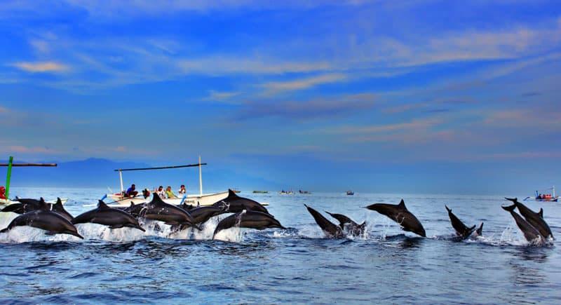 Bali Dolphin Watching Tour