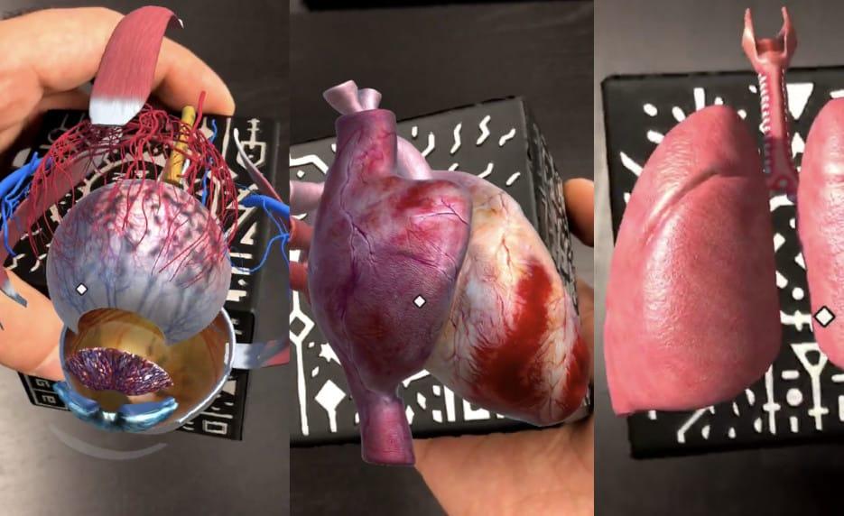 3D Organe