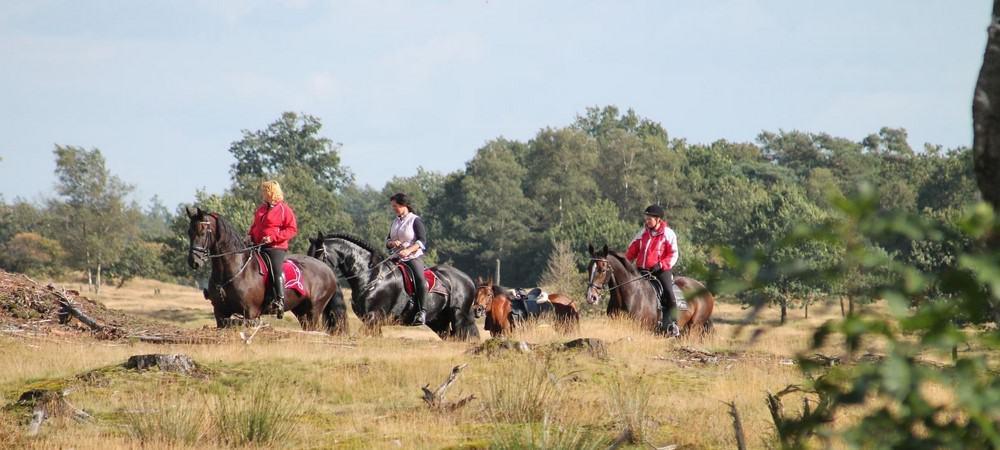 Groepsaccommodatie Alberthoeve paardrijden