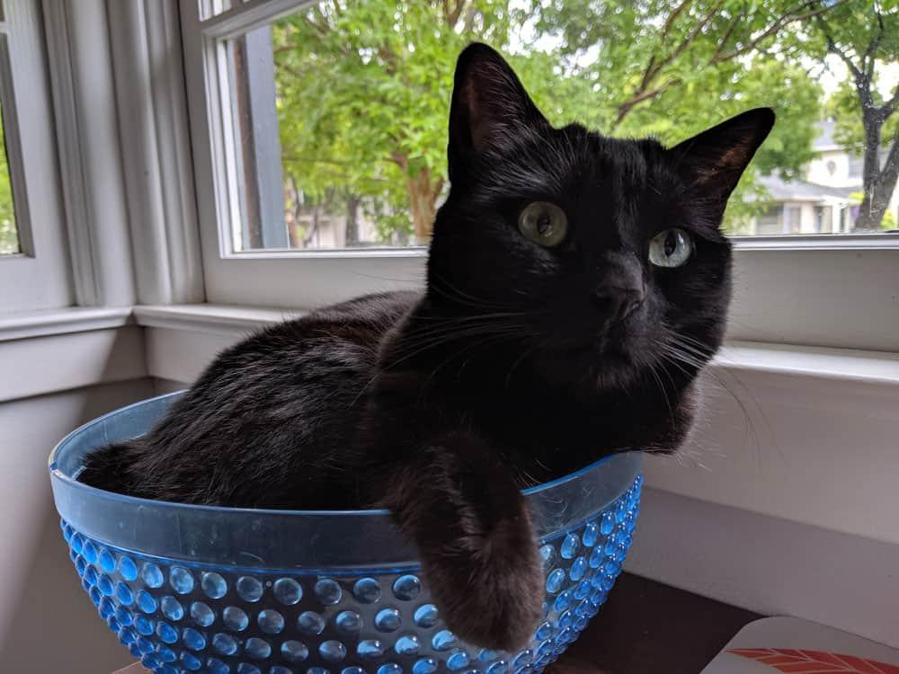 Black cat sitting in a blue bowl by a window.