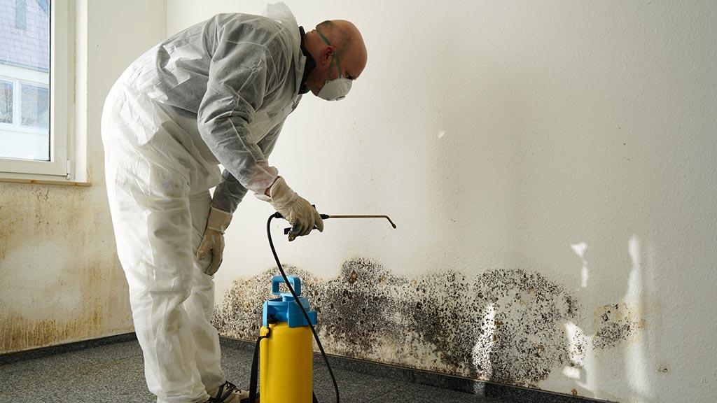 Schimmel in der Wohnung beseitigen entfernen Desinfektion - Schimmel in der Wohnung - Schimmel beseitigen - Schimmel entfernen