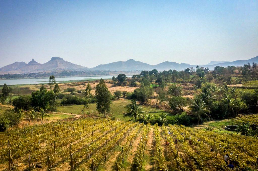 Vallone Vineyard, India - TryWanderingMore