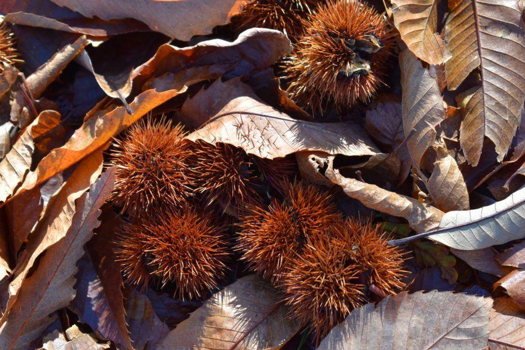 Fin de ciclo: madura el fruto, cae la hoja... es otoño