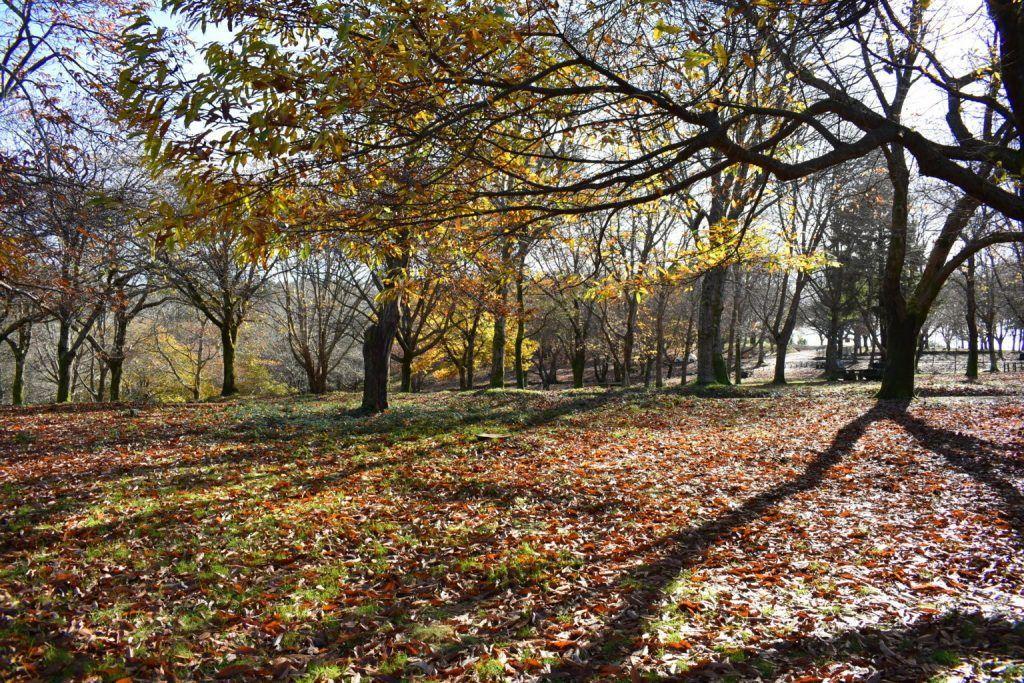 Los rayos de son proyectan sombras de árboles desnudos en otoño