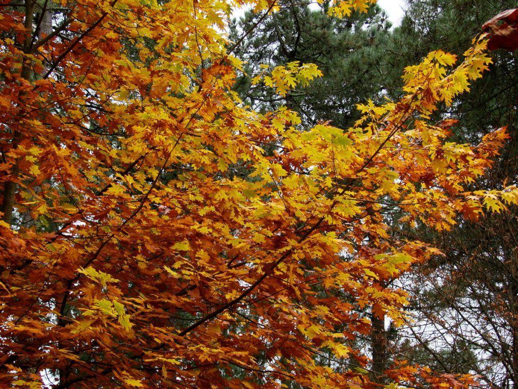 Colores cálidos en intensos del otoño