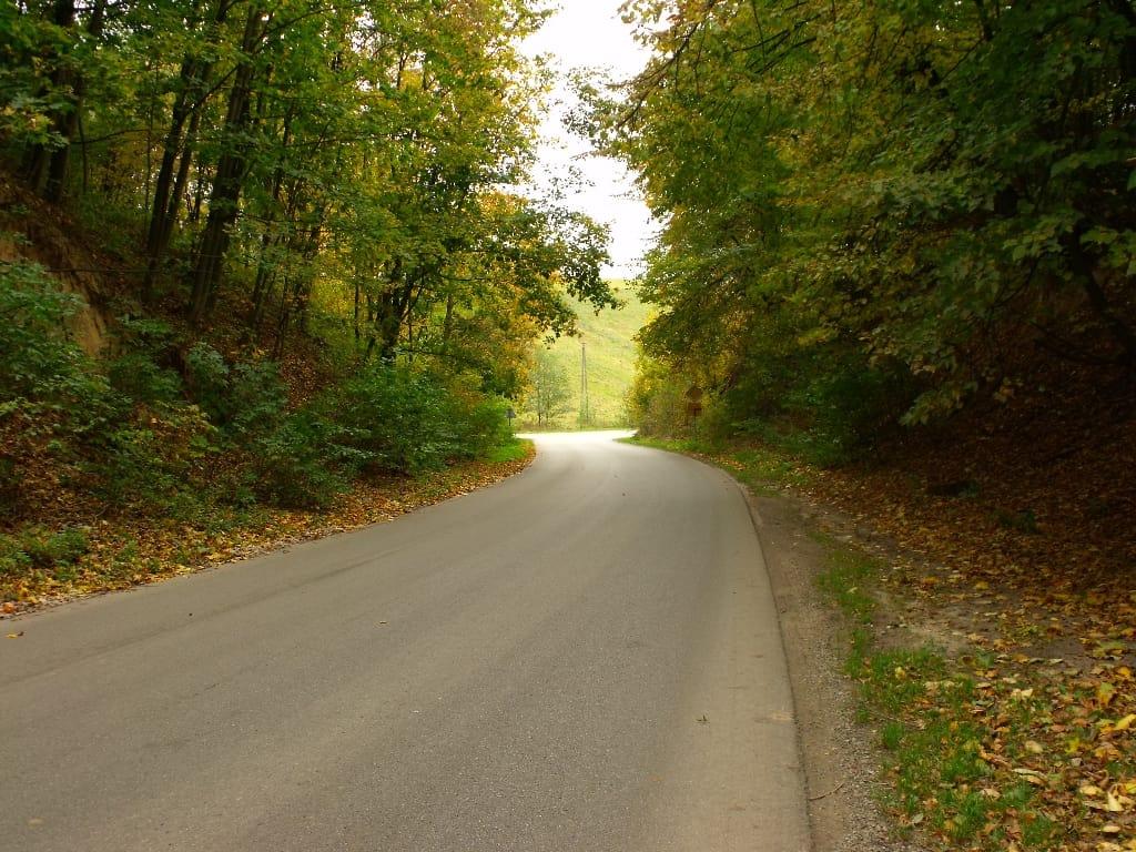 Kazimierski Park Krajobrazowy. Autor SzymoneBorixce. Licencja: CCBY 3.0