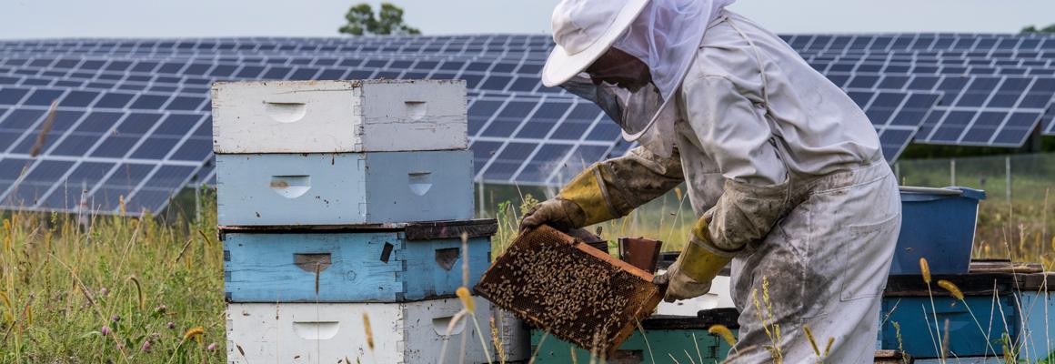 solar land lease pollinator