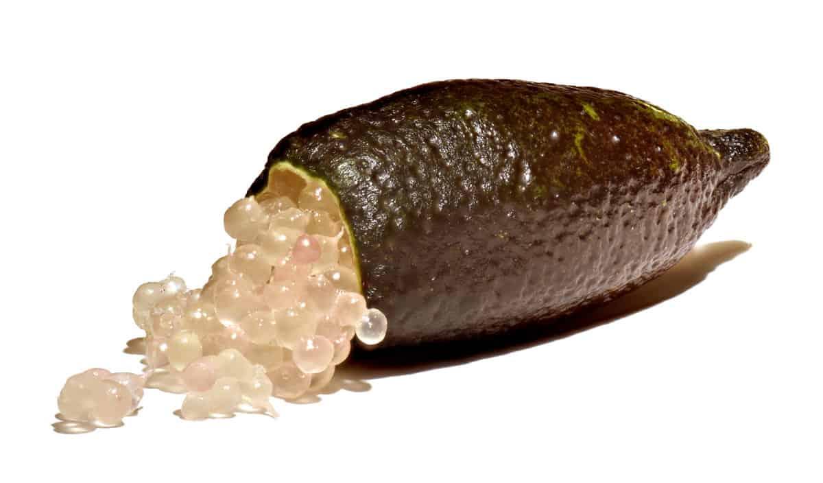 limao-caviar-citrus-australasica-