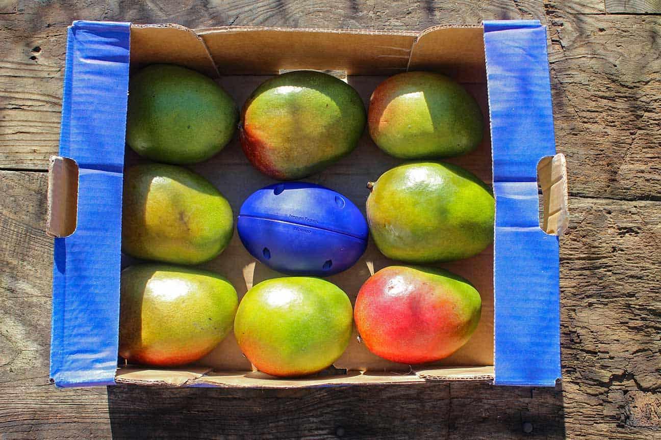 імпактрек манго
