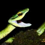 snake in costa rica finn sparen