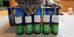 Xoco - meine Katze - schnuppert an Animal Scents (r) - ätherischen Ölen von Young Living
