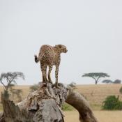 Serengeti Safari-2