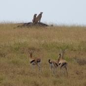 Serengeti Safari-4