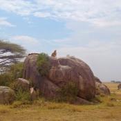 Serengeti Safari-5