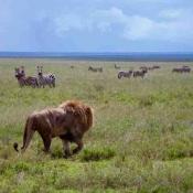 Serengeti Safari-6