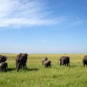 Serengeti Safari-15