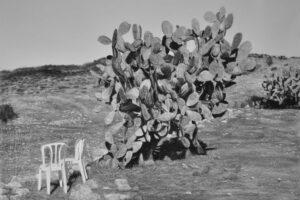 Samah Shihadi, Cactus Harvest #3, 2018, charcoal on paper, 120 x 150 cm