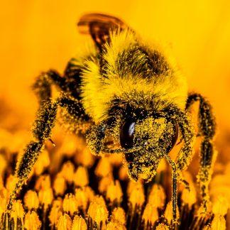 Bee macro, Wiping her eyes
