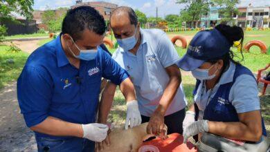 Photo of Nueva jornada de vacunación antirrábica para perros y gatos