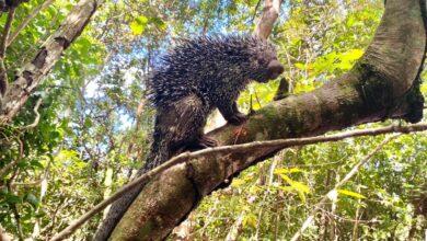 Photo of Regresaron a su hábitat natural a 38 animales silvestres