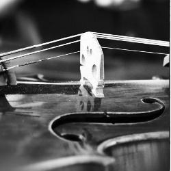 July 22nd   8:30pm – String Ballade