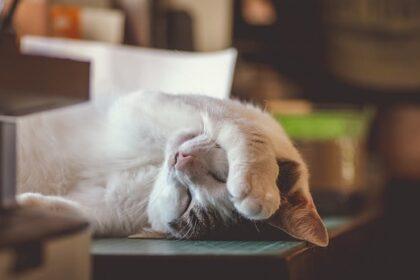 10 anledningar till att du alltid känner dig trött