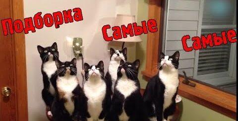 Неожидал Коты получившие оскар