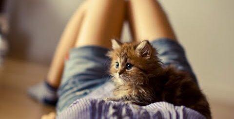 Приколы с котами (Девушки занимаются с котами) - Cats funny