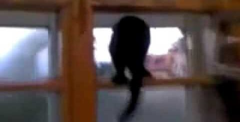 ★ Приколы про кошек! Чёрный кот лает как собака на форточке. Ржач и угар!