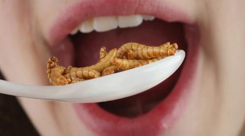 Insectos, la nueva proteína aprobada para consumo en Portugal