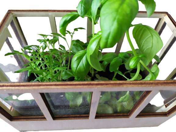 Image shows some Basil and the start of Tomatoes growing.
