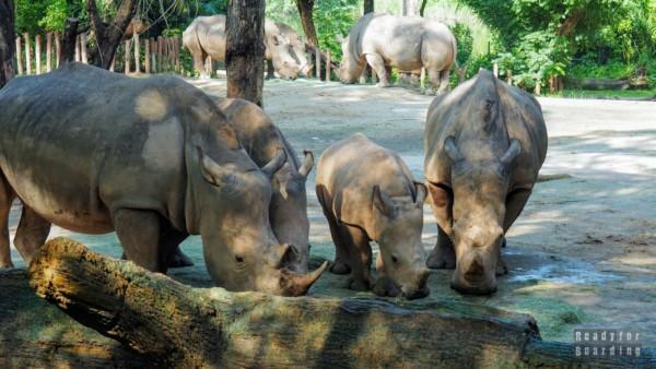Zoo Singapur