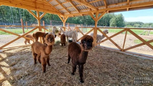 Dobronianka - mini zoo i kompleks rekreacyjny