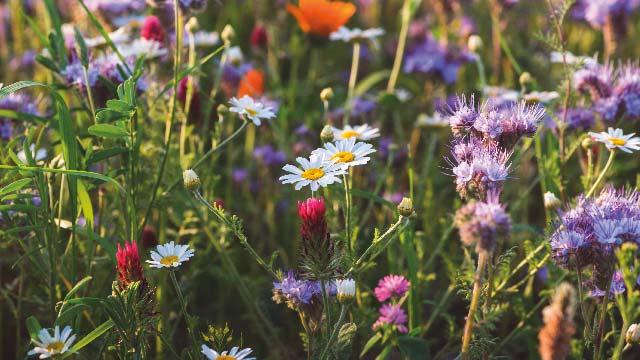 Atoka Wildflower and Pollinator Festival