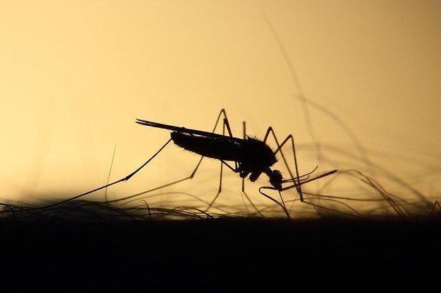Dengue yopal