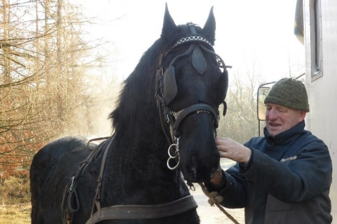 Fries paard fotograaf Ciska van Geer